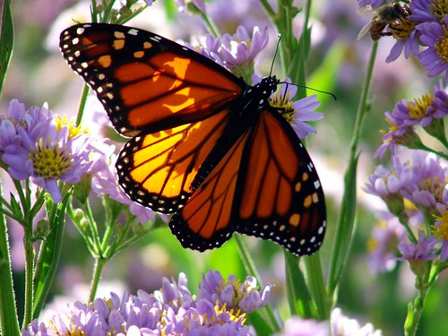 Pictures of Butterflies, Butterfly Pictures, Pictures of Butterflies Pictures