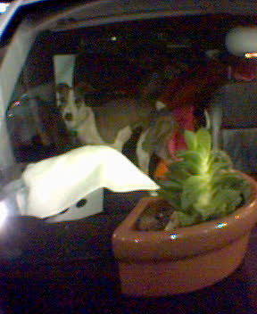 bocce in the car, cactus on the dashboard