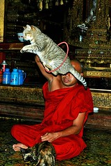 Lion Taming For Beginners 101 (tarotastic) Tags: red lake cat wow jumping state superb fav50 burma monastery inle 100 shan 50 ngaphekyaungmonastery jumpingcatmonastery