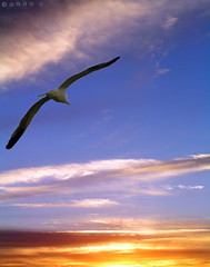 Free as a bird (julioc.) Tags: blue sunset pordosol sky bird portugal beautiful animal animals ilovenature freedom seagull algarve gaivota julioc cy2 challengeyouwinner 3waychallenge favescontestwinner pfogold j2549