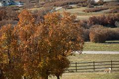 meisha autumn colorado sadmice foilage