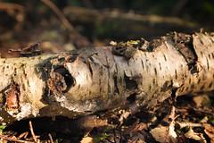 Fallen Branch (by floyduk)