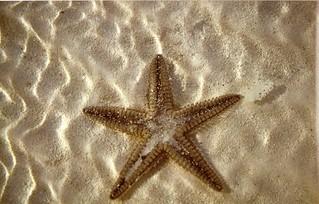 seastar in low water
