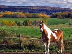 Majestic* (Imapix) Tags: voyage travel autumn portrait horse canada fall nature field animal wonder landscape photo bravo colorful photographie natural quebec qubec favourites favs imapix topfavpix gatangbourque gatanbourque copyright2006gatanbourqueallrightsreserved  copyright2006gatanbourqueallrightsreserved gaetanbourque pix50 imapixphotography gatanbourquephotography