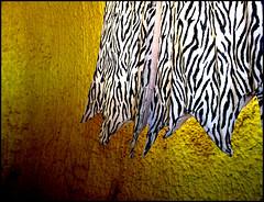 yellow & zebra (JessiQua) Tags: flintstoneplace arizona southwest roadtrip zebraprint oddness strange whatever kooky travel