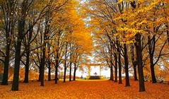Golden afternoon (Wen Nag (aliasgrace)) Tags: park autumn trees orange art fall topf25 oslo norway wow golden norge topv555 creative pavilion torshovparken torshov catchycoloursorange aliasgrace