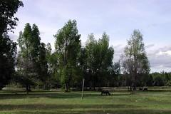 EPSN0048 (tedbundyjr) Tags: danau touban