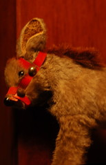 10 things this little donkey knows about me. (diastema) Tags: tinymohairdonkey listeningto alison thepixies niceass