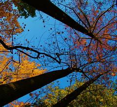 Confetti (katmeresin) Tags: trees sky fall ilovenature interestingness confetti creativecommons 100views 400views 300views 500views 600views 700views mereand interestingnessnov172005 50faves usedondcist katmere