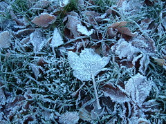 Frosty (Jackie S) Tags: frost frosty grass frostygrass frostyleaves leaves winter november cold frozen mrjackfrost