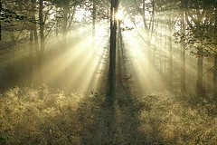 Cathedral in the Forest (algo) Tags: light topv2222 silver photography interestingness topf50 bravo gutentag topv1111 chilterns interestingness1 topf300 explore topv5555 rays topv9999 topv11111 algo topv3333 topv4444 topf100 topf200 sunbeams lightrays undergrowth topv8888 topv6666 topv7777 ogm topf400 naturesfinest topf500 chilternforest topf1000 magicdonkey topf800 6666v66f explore1 specland gtaggroup topf750 goddaym1 iwihttp1 iwihttp2 3000v120f exploretop20 6000v240f oldbutgold 1000faves 5000v500f flickrplatinum world100f theflickrcollection