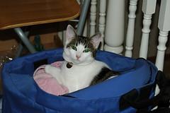 nikon 037 (judey) Tags: cats kitten twinkle