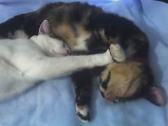 24-11-05_1450 (judey) Tags: pixel cats kitten twinkle