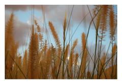 cool touch (G r e n) Tags: arizona nikon d70 gren ilikegrass ©bettyschlueter bettyschlueter