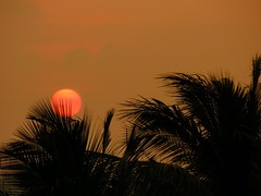 Romancing the sun 1