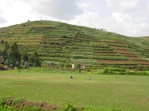Agriculture por amalthya.