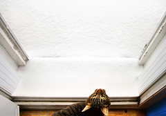 Winter just rang the doorbell and wants to come in (-Antoine-) Tags: door winter snow canada topf25 cat chat montral quebec montreal no name hiver topc50 kitty doorway qubec porte invierno neige noname appart pissed wintery hivernal lamadameestpascontente