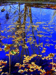 Reflections of Fall (JoelDeluxe) Tags: blue fall yellow topv111 azul 1025fav reflections wonder arbol gold pond aqua albuquerque amarillo topf topv nm joeldeluxe naranja reflujo abigfave