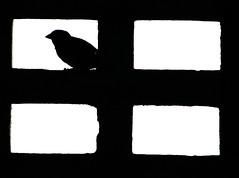 The bird one (eduardo_m) Tags: deleteme5 deleteme8 deleteme deleteme2 deleteme3 deleteme4 deleteme6 bird deleteme9 deleteme7 geometric home contraluz deleteme10 spot s7000 kepper cobog