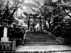 弥彦神社、新潟県、日本。 yahiko jinja, niigata city, japan (by niko.chan)