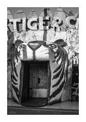 Tiger Strip club (gmouret92) Tags: fuji tiger nightclub greece rhodes grce faliraki x100 dodcanse