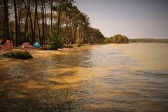 Lac de Biscarrosse (Les photos de LN) Tags: eau sable pins t plage landes baignade sudouest aquitaine biscarrosse
