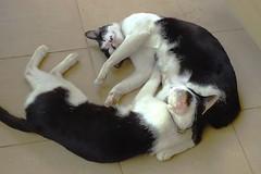 Feel Good! (NNTON) Tags: life pet animal cat