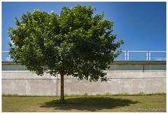 Shade (PvRFotografie) Tags: blue shadow holland color tree green groen blauw minolta nederland boom schaduw schiedam kleurrijk kleur sonya900 minolta3570mmf40