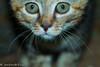 New kid on the block (WaterBugsPics) Tags: cat kitten young animal pet challengegamewinner tmoacg agcgsweepwinner challengeyouwinner cy2