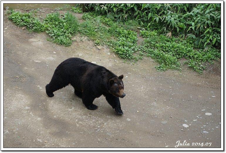 熊牧場 (15)