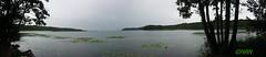 WisentReservat Damerower Werder (dorf-fotograf) Tags: wild panorama lake nature animal bug see dragonfly wildlife natur bison vorpommern mecklenburg markro wisent reservat damerow wisente