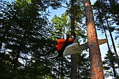 How'd ya get your saw stuck in a tree Paul Bunyan (Cyber Drifter) Tags: tree saw nikon stuck cut chainsaw stihl jammed d5200