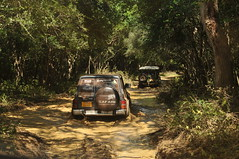 Wilpaththu National Park - Mud - Nissan Patrol Y60 and BJ40 (deeptha.net (.)) Tags: mud safari srilanka landcruiser nissanpatrol fj40 bj40 y60 nissansafari wilpaththu