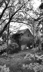 abandonned house between beautyfull wilderness (moetsj) Tags: flowers trees wild blackandwhite bw house flower color tree abandoned nature monochrome outdoor decay no ruine wilderness bushes beautifull intothe