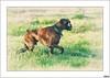 Ulises I (V- strom) Tags: ulises bóxer texturas recuerdo luz amigo perro mascota nikon nikon2470 nikon50mm