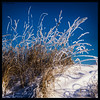 frost (P.Höcherl) Tags: 2017 nikon d5300 tamron tamron16300mmf3563diiinafvcpzdmacro frost sky blue grass gras himmel blau winter schnee snow weiden schirmitz oberpfalz bayern deutschland upperpalatinate bavaria germany plants
