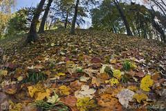 bosco e sottobosco, wood and undergrowth (paolo.gislimberti) Tags: paesaggi landscapes parchiurbani urbanparks sottobosco undergrowth foglie leaves autumn autunno autumnalcolors coloriautunnali