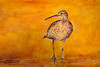 Whimbrel in a California Sunset (bcbirdergirl) Tags: birds bird nature wildlife whimbrel painting mixedmedia scrippsbeach lajolla california ca usa us vacation january acrylicpaint acrylics indianink ink wood 18x24 myart art paint woodmedium sandiego shorebird shorebirds sunset californiasunset orange gold socal impressionism love orangeisthehappiestcolour numeniusphaeopus useoflight movement creative artistic artist painter