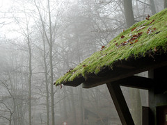 Moosdach (onnola) Tags: koblenz arzheim rheinlandpfalz deutschland rhinelandpalatinate germany nebel mist wald forest winter dach roof moos moss