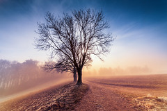 The Last Tree Before the Mist (Maximecreative) Tags: select tree silhouette mist field winter wideangle glowing atmospheric frost fog path perspective outdoors sky forest woods sun flare samyang 14mm switzerland brumeux brume brouillard chemin soleil gel hiver suisse