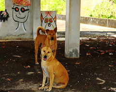 ,, Smile ,, (Jon in Thailand) Tags: smile thedogpalace roof monsters jungle nikon d300 nikkor 175528 thaismile dog dogs k9 k9s graffiti pigeonpoop tail eyes ears parapetwall redhead hand sherman green red yellow hotsun reallyhotsun happydogs rescueddogs mutts rescuedmutts littledoglaughedstories