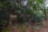 山中遊048 (kingston Tam) Tags: moss grass path hillside hiking field bigtree oddtree garden nature fujifilmxt1