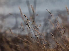 Delaware River - Tamron 70-300mm - Canon 5D Mark IV (abysal_guardian) Tags: delaware river tamron 70300mm canon 5d mark iv fox pint state park eos 5dmarkiv 5dm4 5dmk4 5d4 tamronsp70300mmf456divcusd di vc usd f456