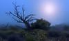 The Rising (Söckchen) Tags: hawaii bigisland maunakea baum tree nebel fog dassoeckchen