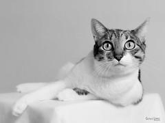 Lola y su estilo... (Troylo@stur) Tags: gato gata cat blancoynegro byn bw blackwhite ojos eyes felino mascota lola