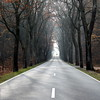 november perspective (kexi) Tags: poland polska europe opolszczyzna droga road forest trees november 2015 canon square perspective fall autumn instantfave