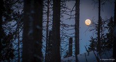 Moonlight shadow (z.dorighi) Tags: moon light shadows trees forest mysterious witch fear scary landscape woods snow winter