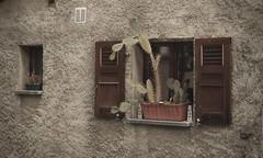 la fenêtre aux cactus (bulbocode909) Tags: valais suisse branson fully fenêtres cactus maisons murs