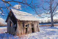 Winter Shack (gabi-h) Tags: oldshack dilapidated architecture winter princeedwardcounty longpoint princeedwardpoint gabih solitary bluesky snow january