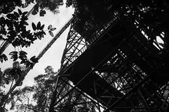 Canopy tower and bridge (Ken Pick) Tags: amazonbasin ecuador blackandwhite southamerica naporiver travel sachalodge 117picturesin2017 unusualangle jungle tower bridge